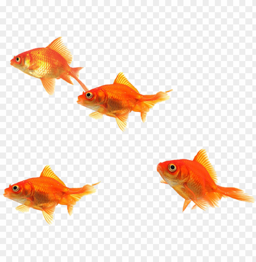 Fish School Png Clip Art Free Stock Fish Images Png Hd Png Image With Transparent Background Toppng