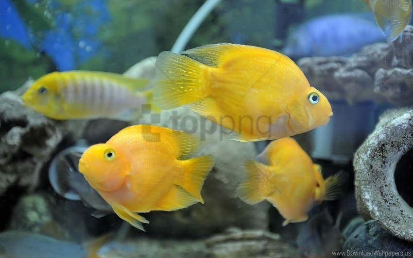 free PNG fish, swim, underwater wallpaper background best stock photos PNG images transparent