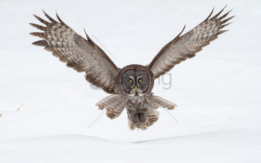 Flap Flying Owl Snow Wings Wallpaper Background Best Stock Photos Toppng