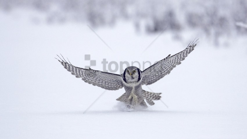 free PNG flap, owl, snow, wings wallpaper background best stock photos PNG images transparent