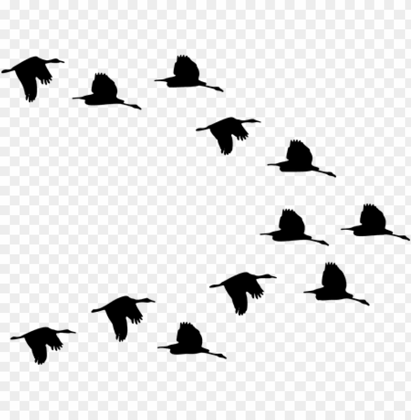 free PNG flock, ducks, birds, animals, flying - ducks flying silhouette PNG image with transparent background PNG images transparent