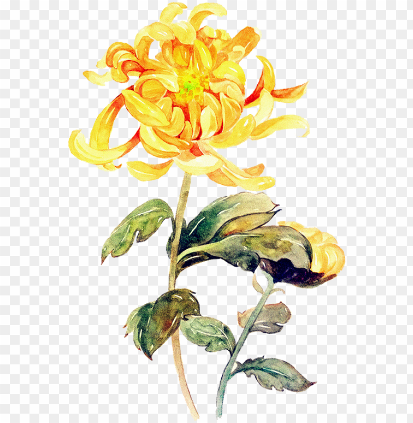 free PNG floral illustrations, artworks, watercolor, cartoon, - yellow flower paint PNG image with transparent background PNG images transparent