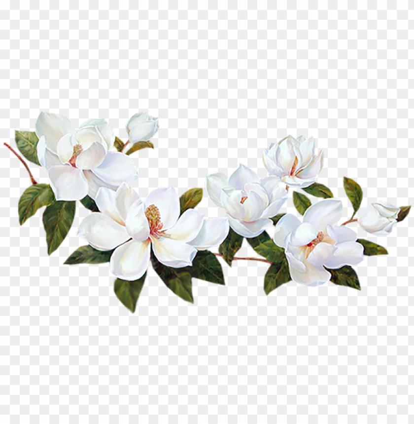 Flores Blancas Png Bordes De Flores Blancas Png Image With