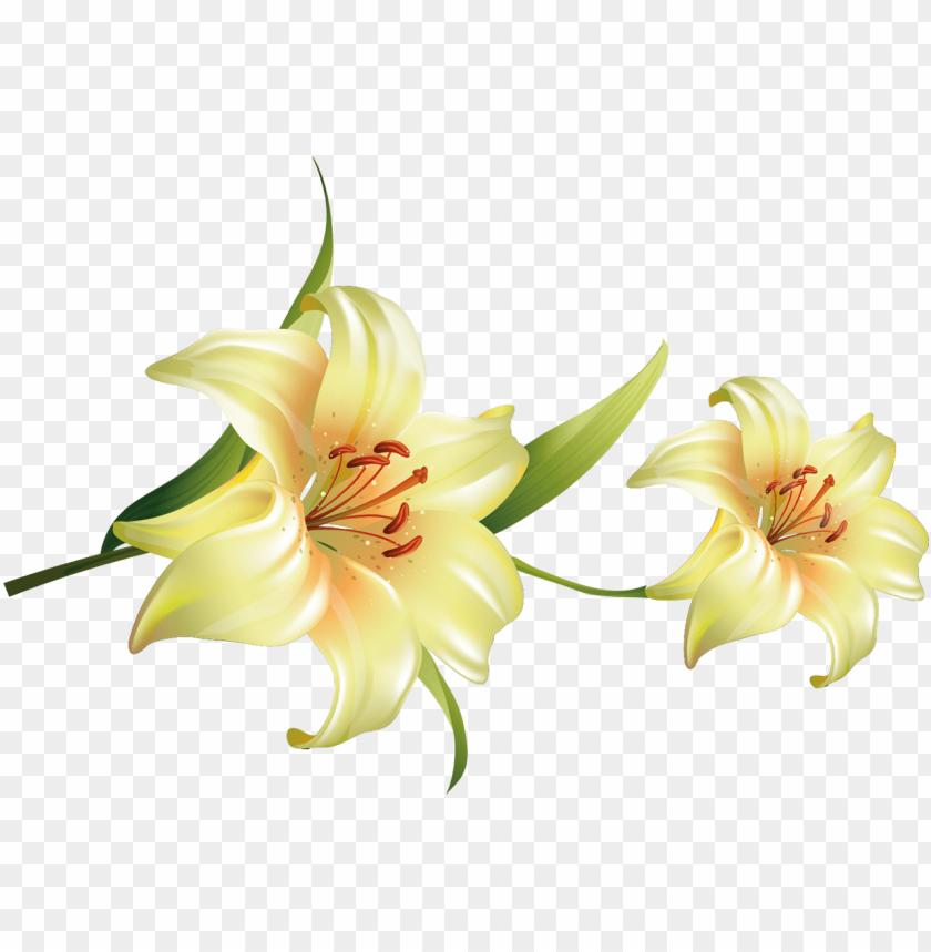 free PNG flores bonitas con fondo transparente PNG image with transparent background PNG images transparent