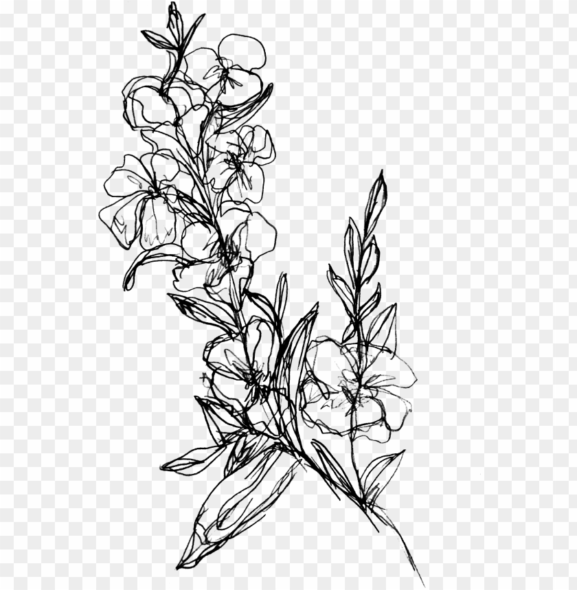 Flower Branch Submitted By Walmartteacups To R Drawing Of Flower Branch Png Image With Transparent Background Toppng