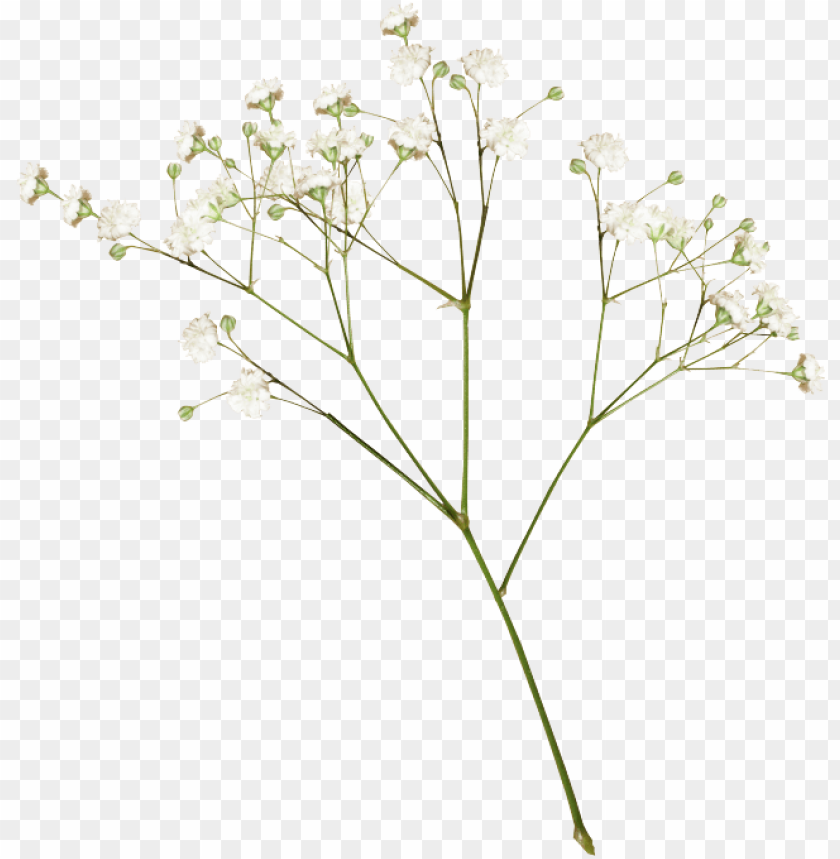 free PNG flower images, transparent flowers, dried flowers, - transparent dried flowers PNG image with transparent background PNG images transparent