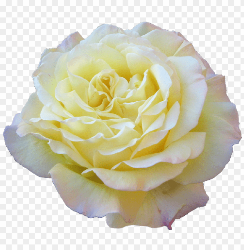 free PNG flower png tumblr flowers - yellow transparent tumblr floral PNG image with transparent background PNG images transparent