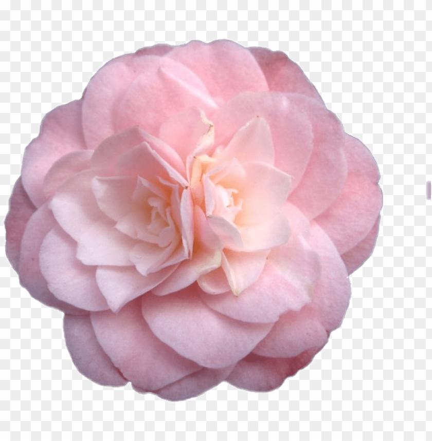 free PNG flower sticker png niche nichememe freetoedit flowers - pink flowers tumblr transparent PNG image with transparent background PNG images transparent