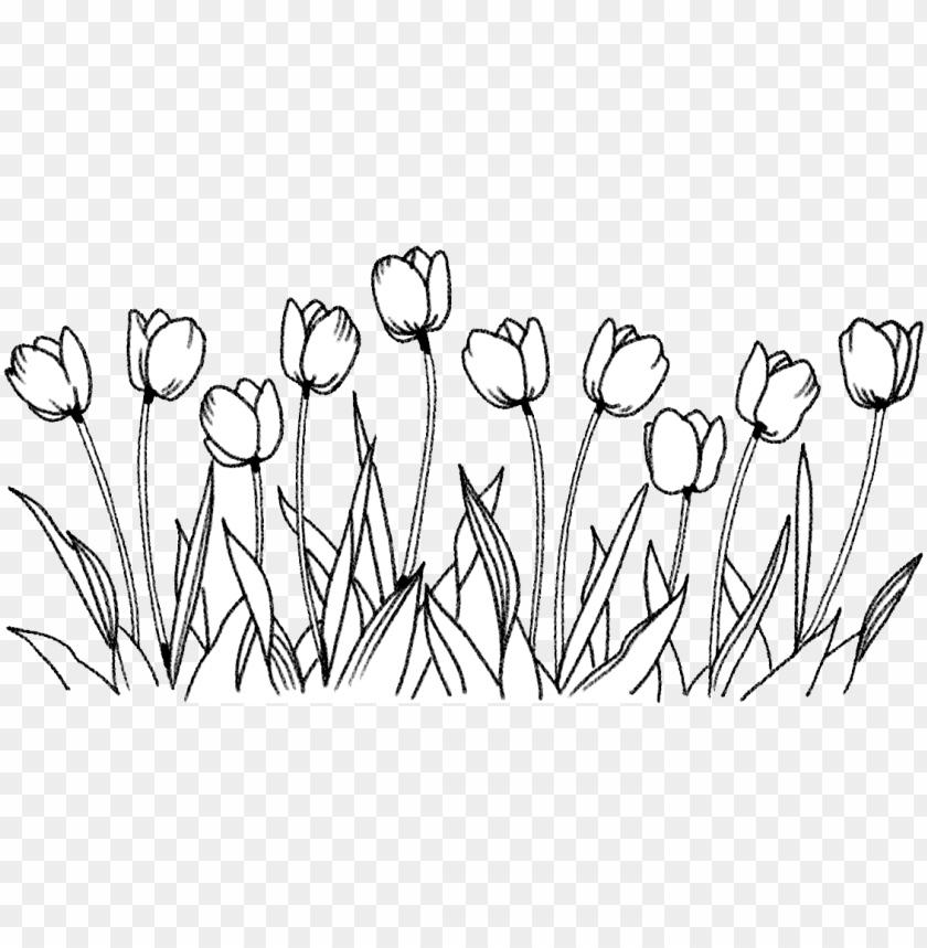 free PNG flower tulip coloring book line art drawing - flowers drawing PNG image with transparent background PNG images transparent