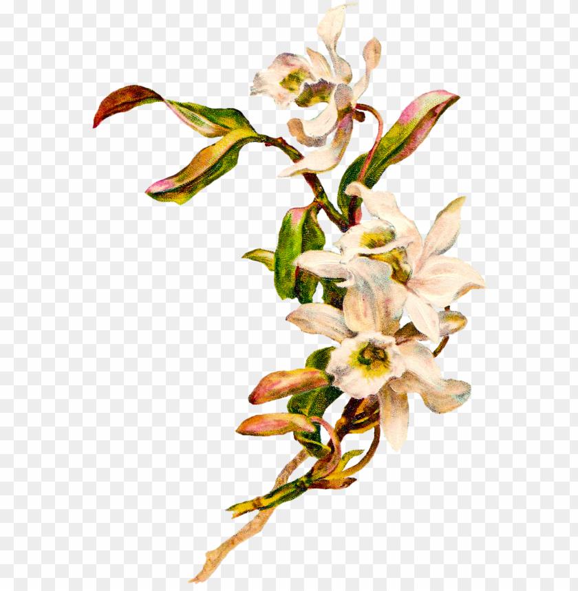 free PNG flower vintage cliparts - white flower vintage PNG image with transparent background PNG images transparent