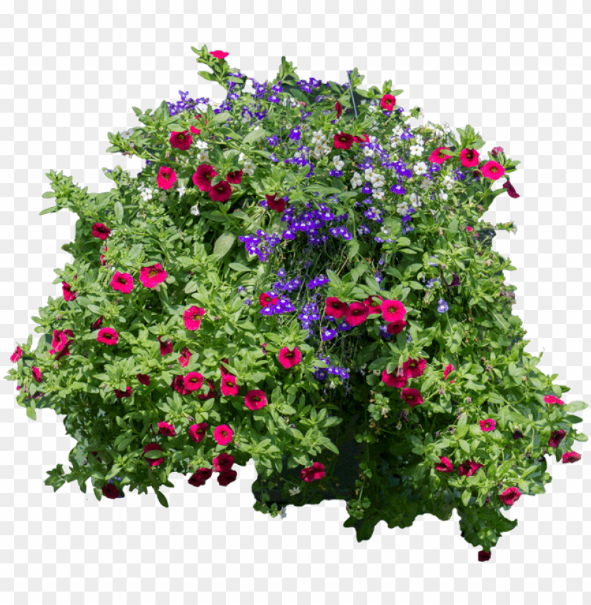 Flowers And Bushes Hanging Flowers Png Flower In Vine Png