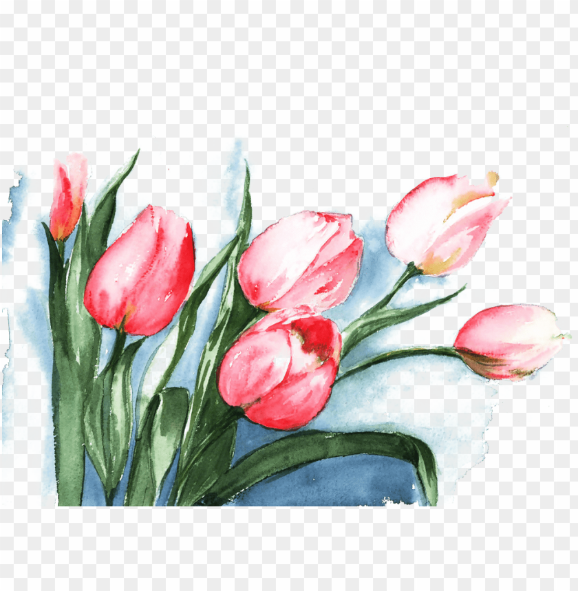 free PNG flowers watercolor painting drawing illustration - tulips watercolor painti PNG image with transparent background PNG images transparent