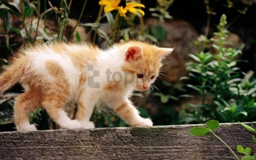 free PNG fluffy, grass, kitten, walk wallpaper background best stock photos PNG images transparent