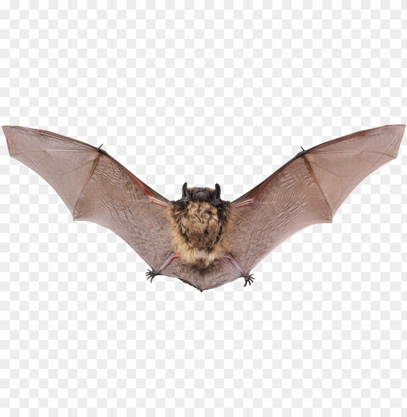 free PNG Download flying bat png images background PNG images transparent
