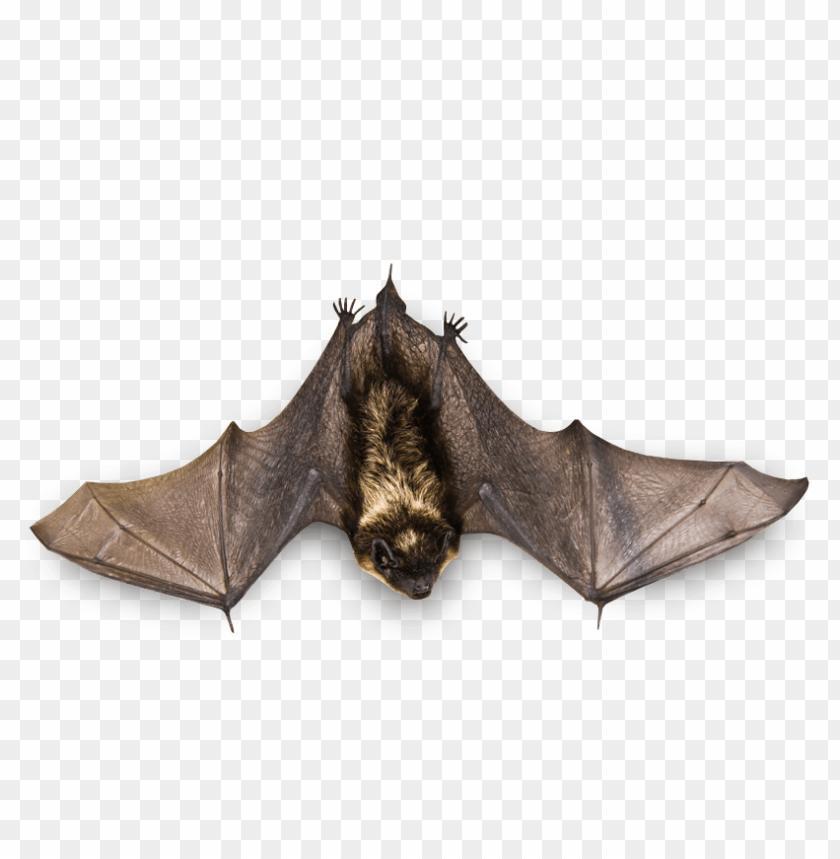 free PNG Download flying bat png images background PNG images transparent
