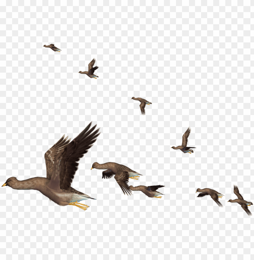 Free Birds Clip Art with No Background - ClipartKey