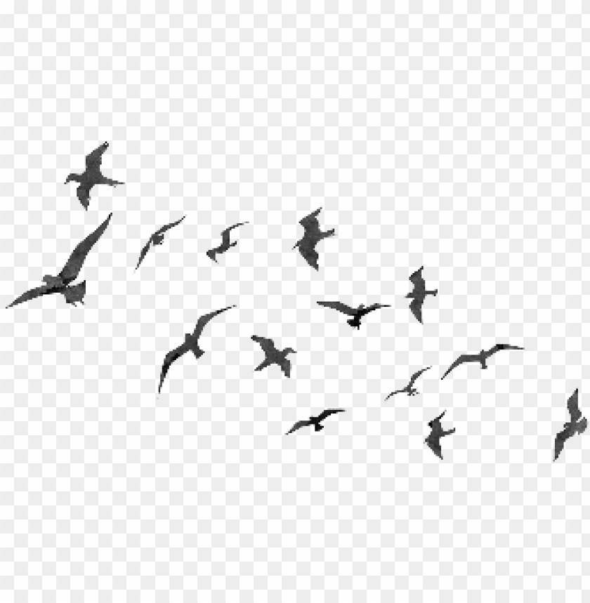 free PNG flying birds png - flyingt birds PNG image with transparent background PNG images transparent