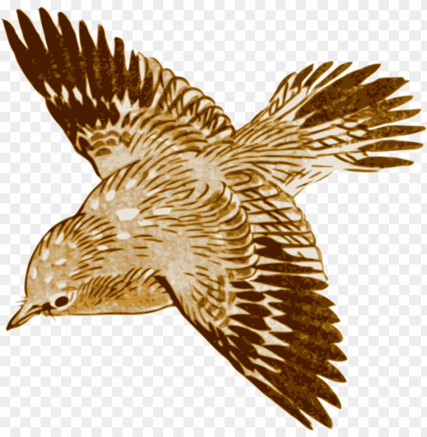 free PNG flying brown birds PNG image with transparent background PNG images transparent