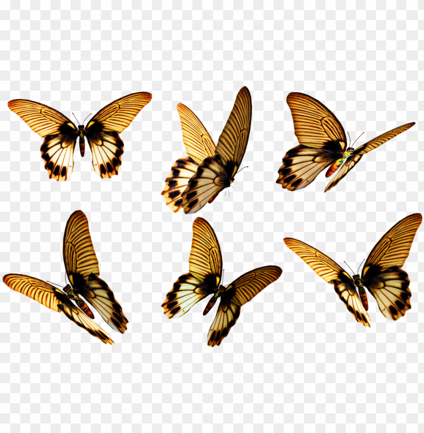 free PNG flying butterfly png free download - insect wings PNG image with transparent background PNG images transparent