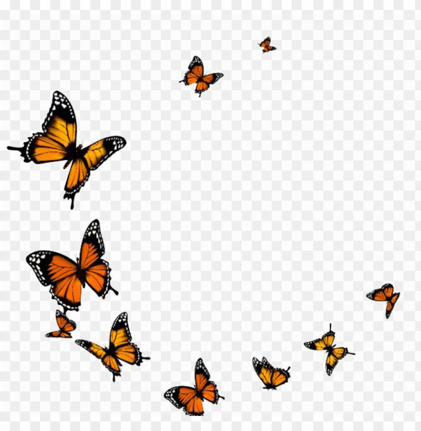 free PNG flying butterfly png transparent image - transparent background butterfly fly PNG image with transparent background PNG images transparent