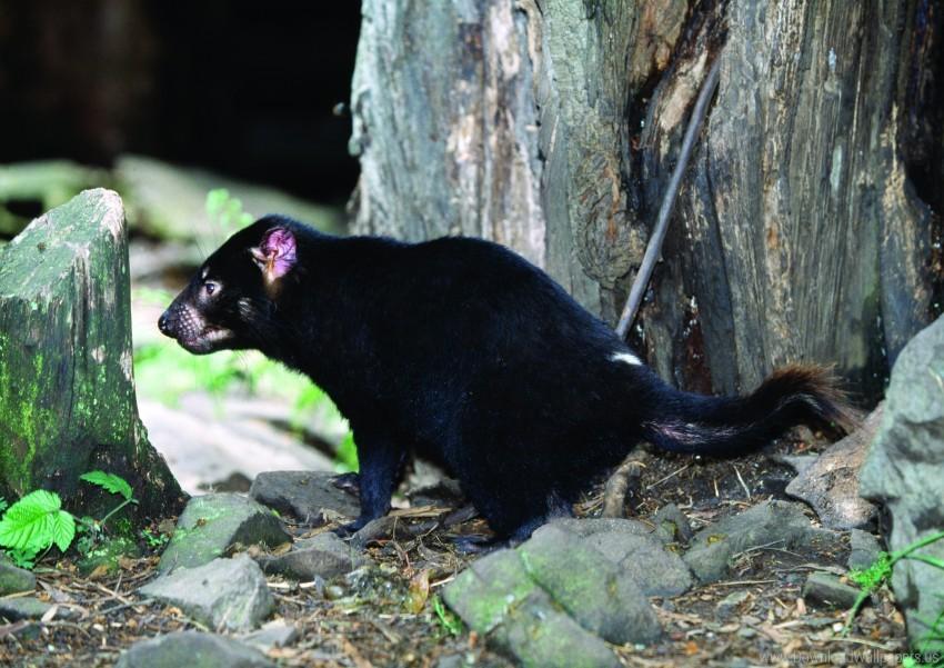 free PNG food, grass, tasmanian devil, walk wallpaper background best stock photos PNG images transparent