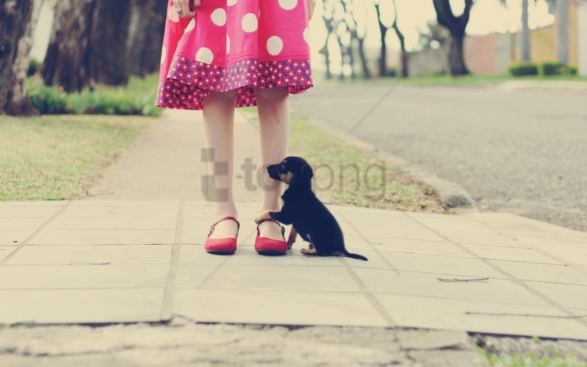 free PNG foot, loyalty, puppy, road wallpaper background best stock photos PNG images transparent