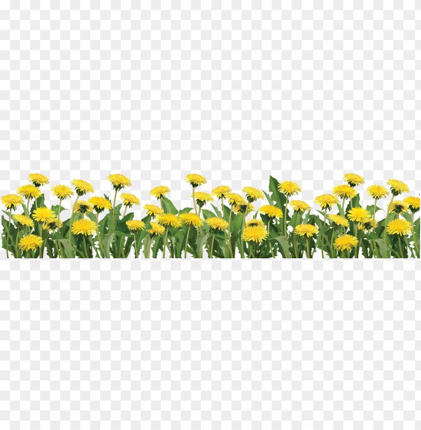 free PNG footer image slide - real plant flower PNG image with transparent background PNG images transparent