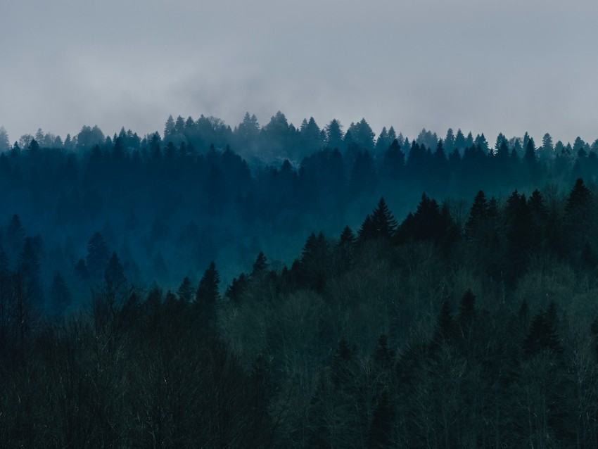 free PNG forest, fog, trees, top view, sky background PNG images transparent
