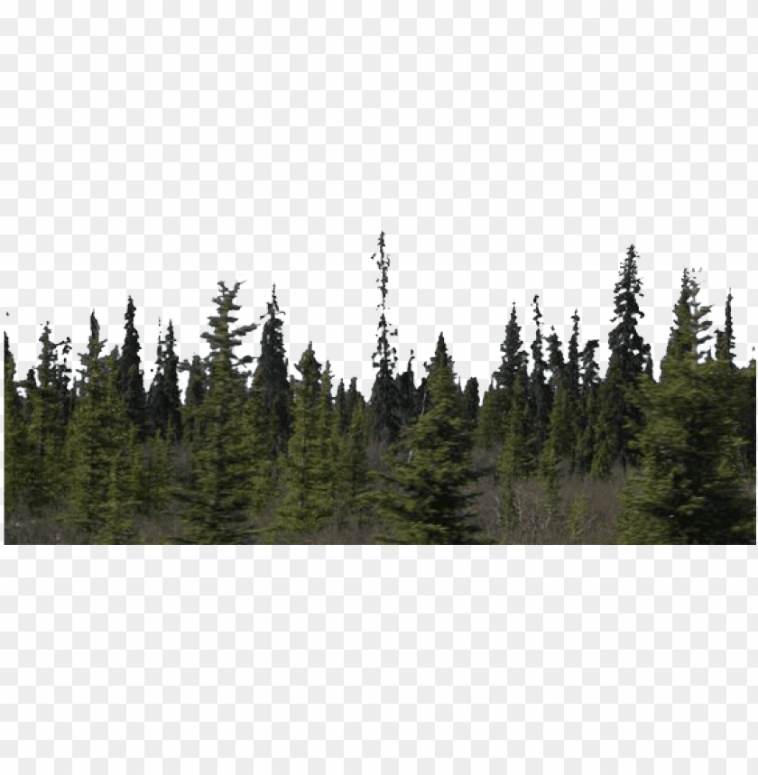 free PNG forest - forest PNG image with transparent background PNG images transparent
