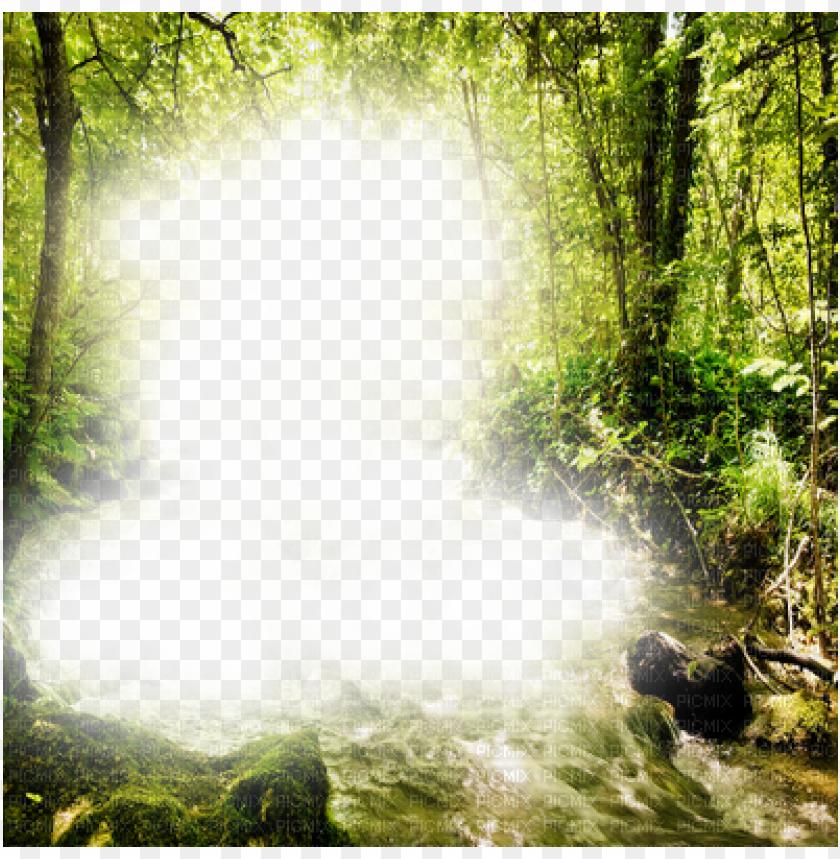free PNG forest frame - png image forest frame PNG image with transparent background PNG images transparent