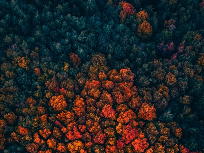 free PNG forest, trees, aerial view, autumn, autumn colors, bright background PNG images transparent