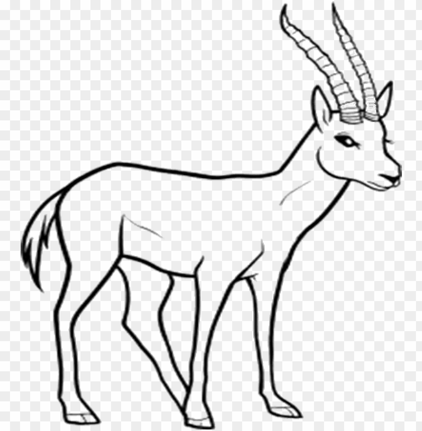 Line Drawing Of Animals At Getdrawings Free Download