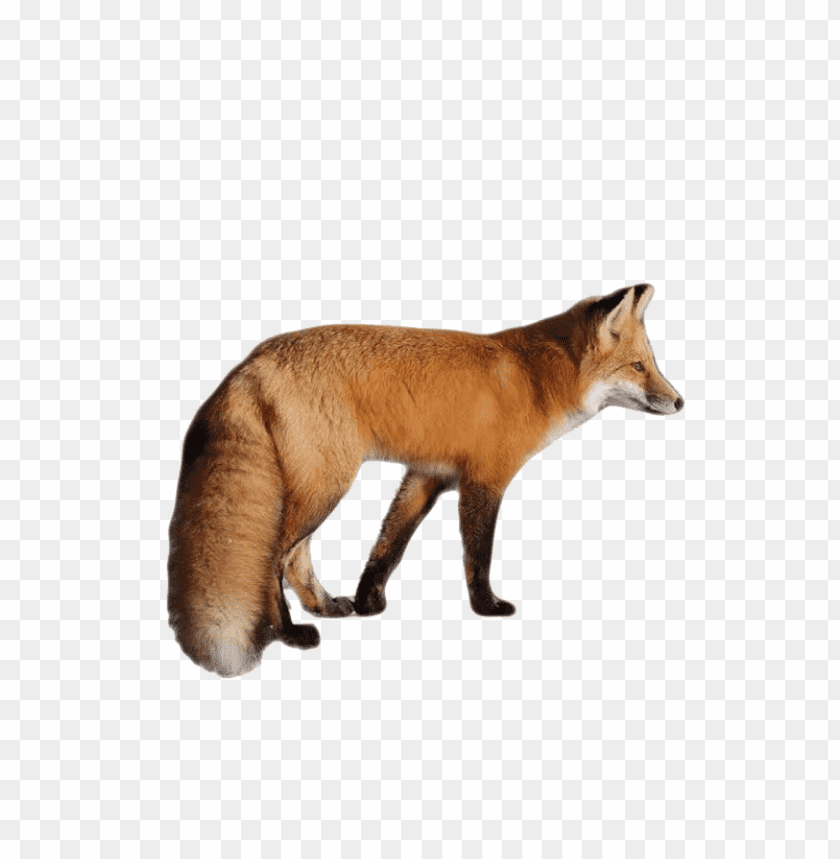free PNG Download fox png images background PNG images transparent