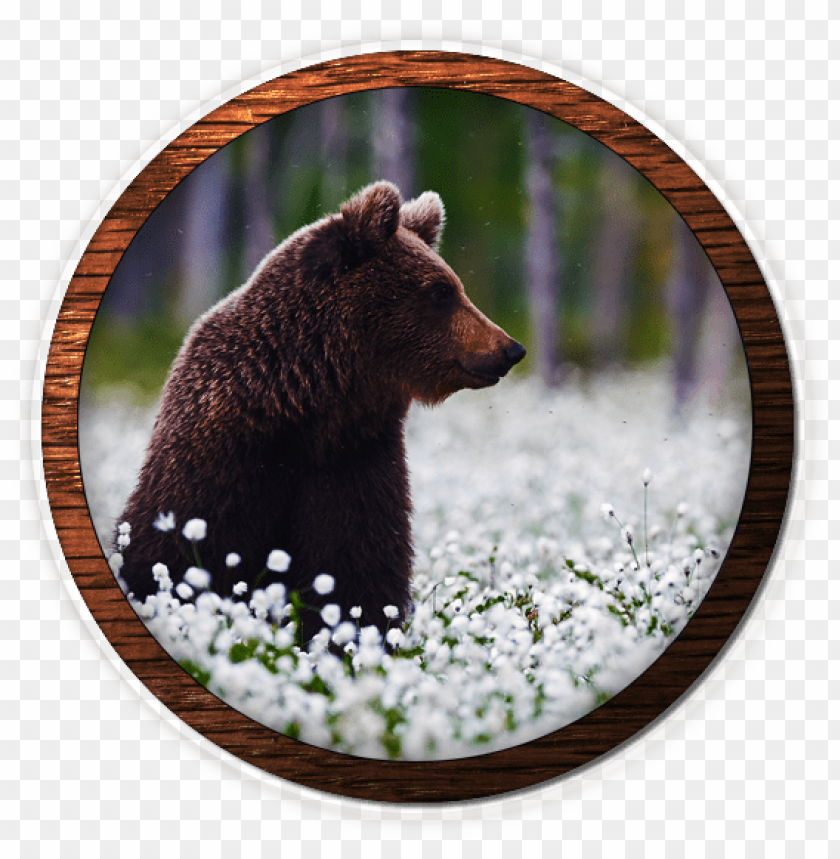 free PNG fox valley web design, fvwd, brand identity, brand - grizzly bear PNG image with transparent background PNG images transparent