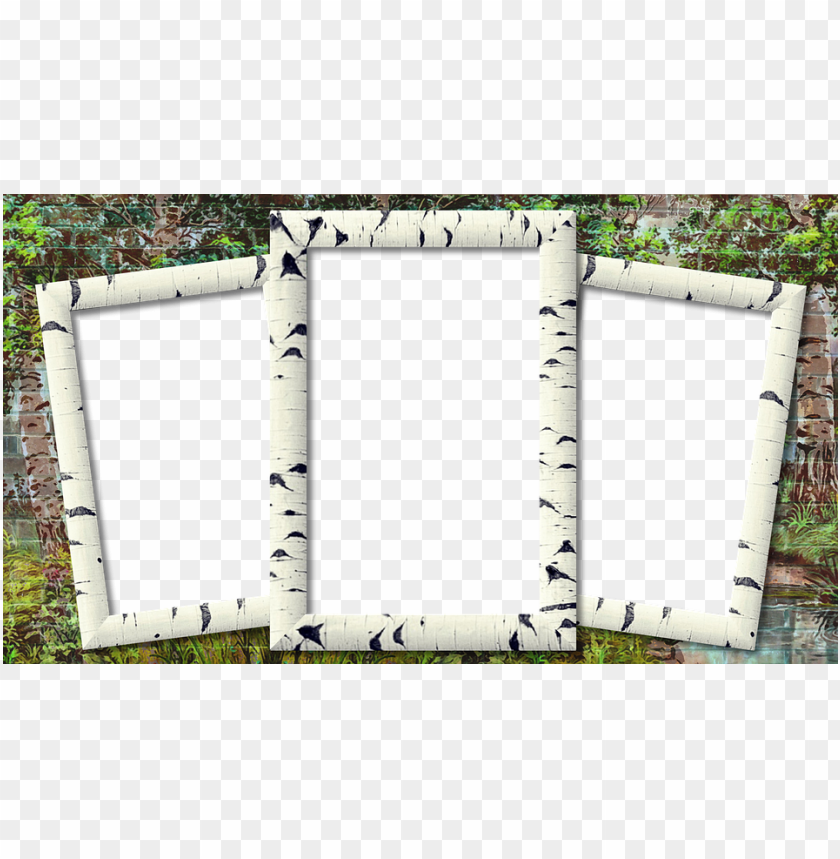 free PNG frame, photo frame, birch, three photo - three photo frame PNG image with transparent background PNG images transparent