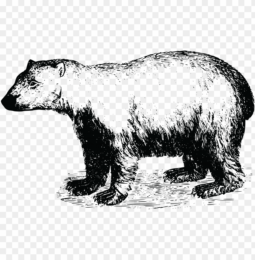 Free Clipart Of A Polar Bear Papa Bear T Shirt Png Image With Transparent Background Toppng