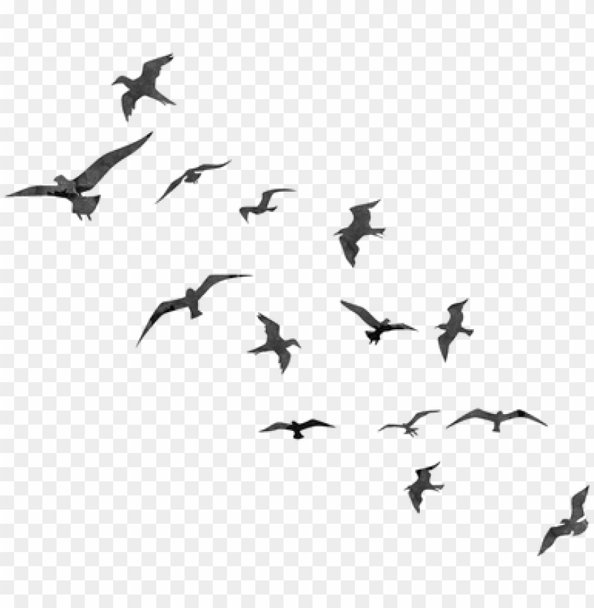 free PNG free cute bird photoshop brushes - bird flying silhouette PNG image with transparent background PNG images transparent