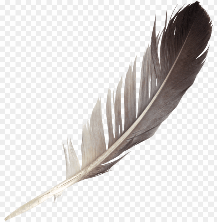 free PNG free download - feather PNG image with transparent background PNG images transparent