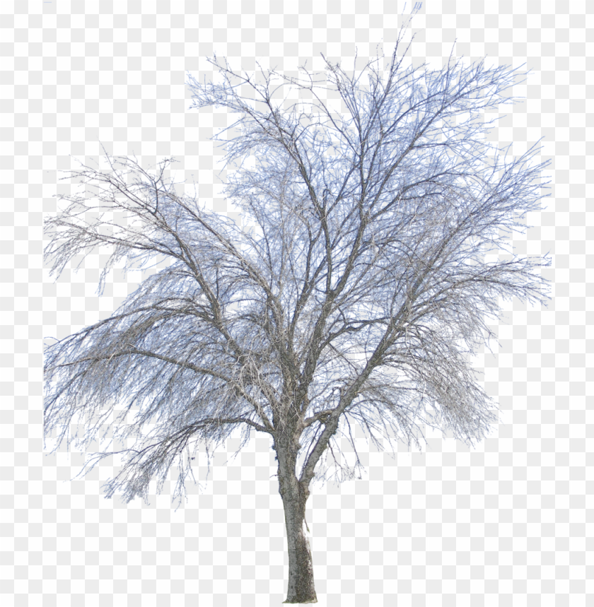 free PNG free icons png - png winter tree PNG image with transparent background PNG images transparent