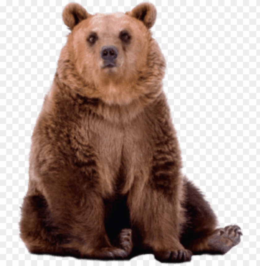 free PNG free png bear png images transparent - grizzly bear PNG image with transparent background PNG images transparent