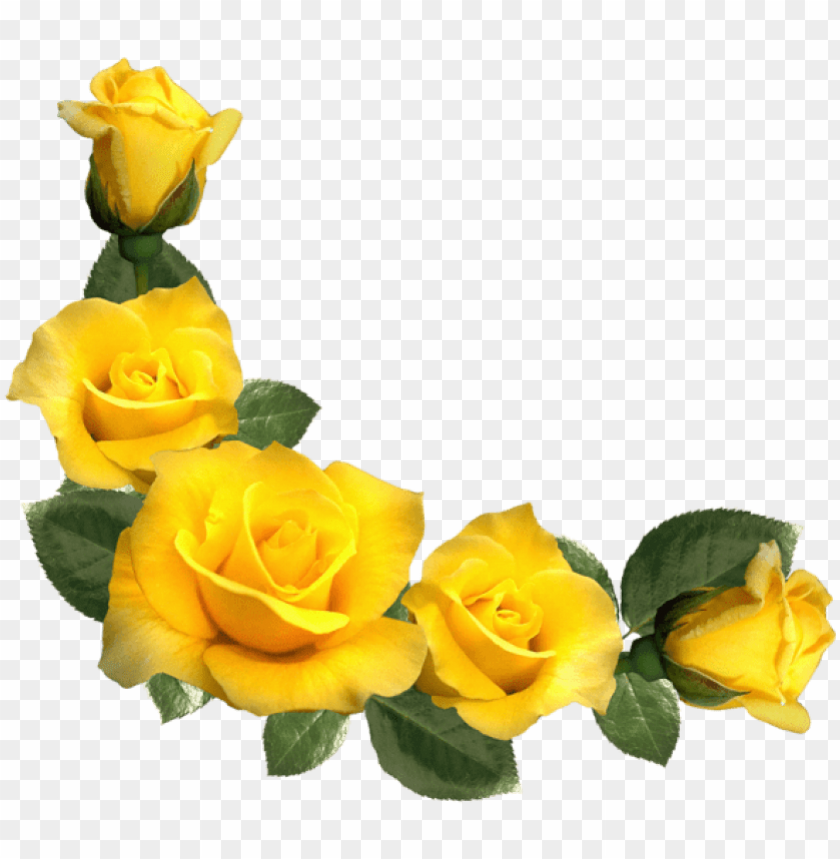 free PNG free png beautiful yellow roses decor png images transparent - yellow rose border PNG image with transparent background PNG images transparent