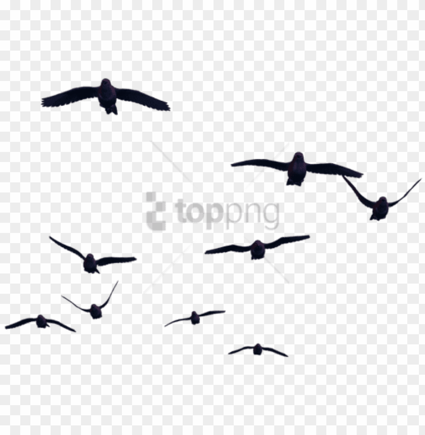 free PNG free png birds for photoshop png image with transparent - birds with transparent background PNG image with transparent background PNG images transparent