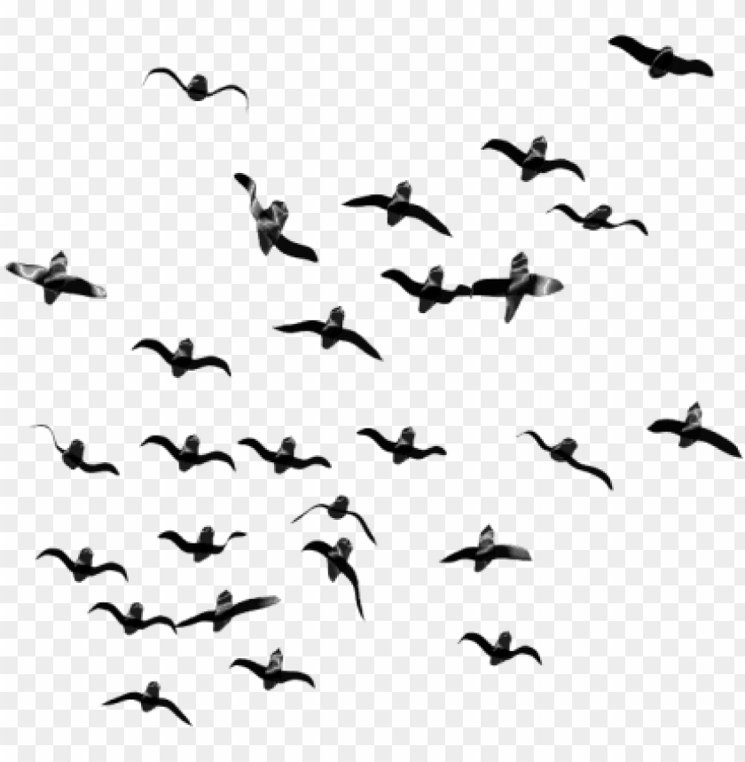 free PNG free png birds png images transparent - flock of birds PNG image with transparent background PNG images transparent
