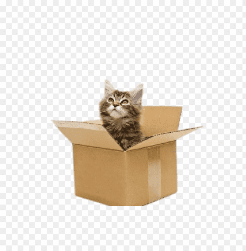 free PNG Download Cat In Cardboard Box png images background PNG images transparent