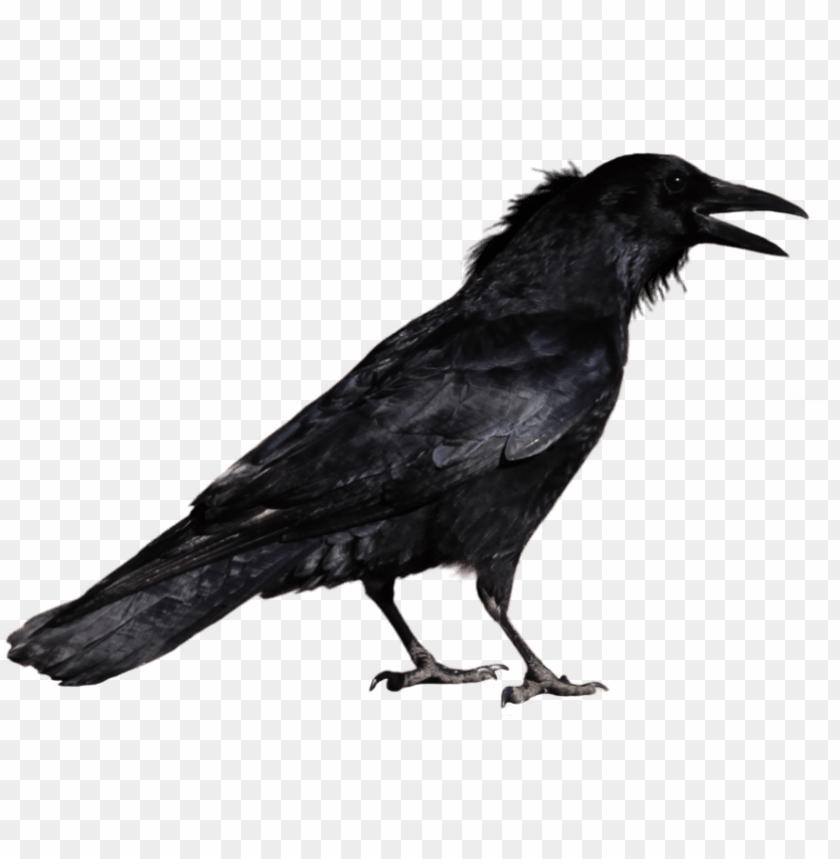 free PNG free png crow png images transparent - crow PNG image with transparent background PNG images transparent