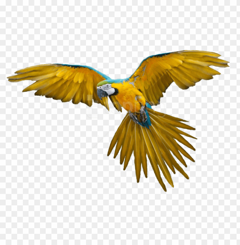 free PNG free png download birds png images background png images - bird flying gif PNG image with transparent background PNG images transparent