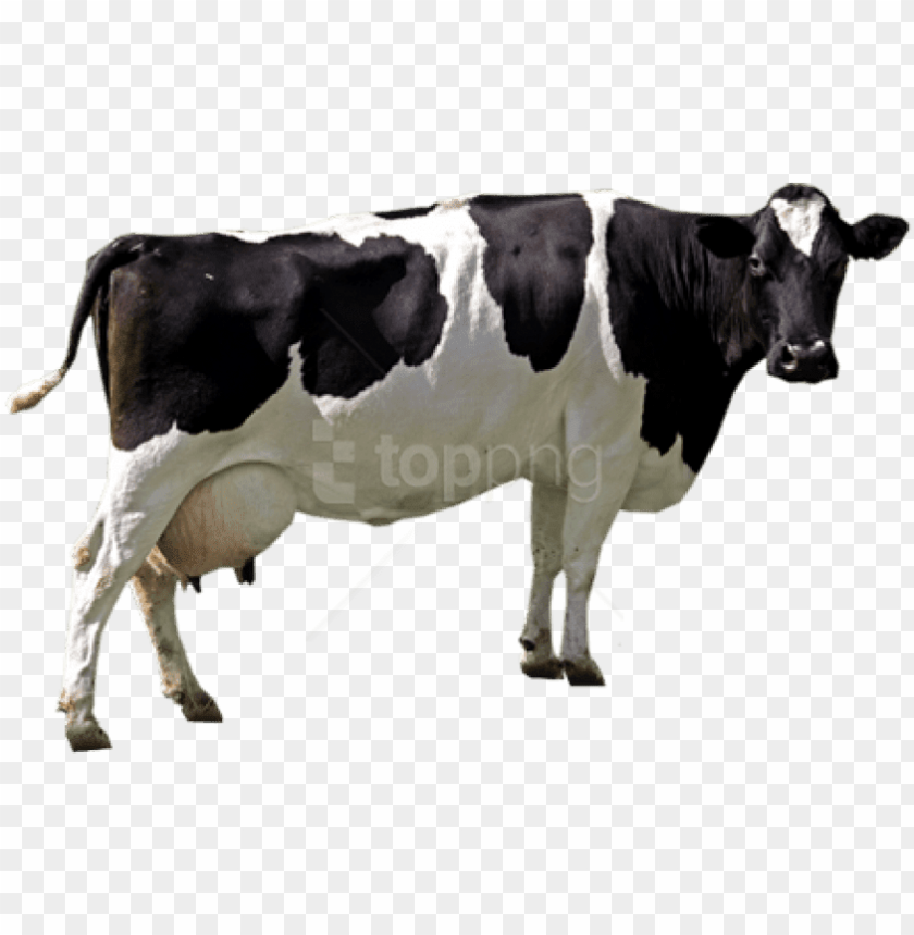 free PNG free png download cow png images background png images - cow PNG image with transparent background PNG images transparent