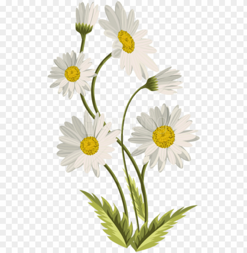 free PNG free png download daisies transparent png images background - transparent background daisy PNG image with transparent background PNG images transparent