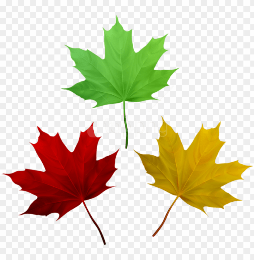 free PNG free png download fall leaves set clipart png photo - maple leaf PNG image with transparent background PNG images transparent