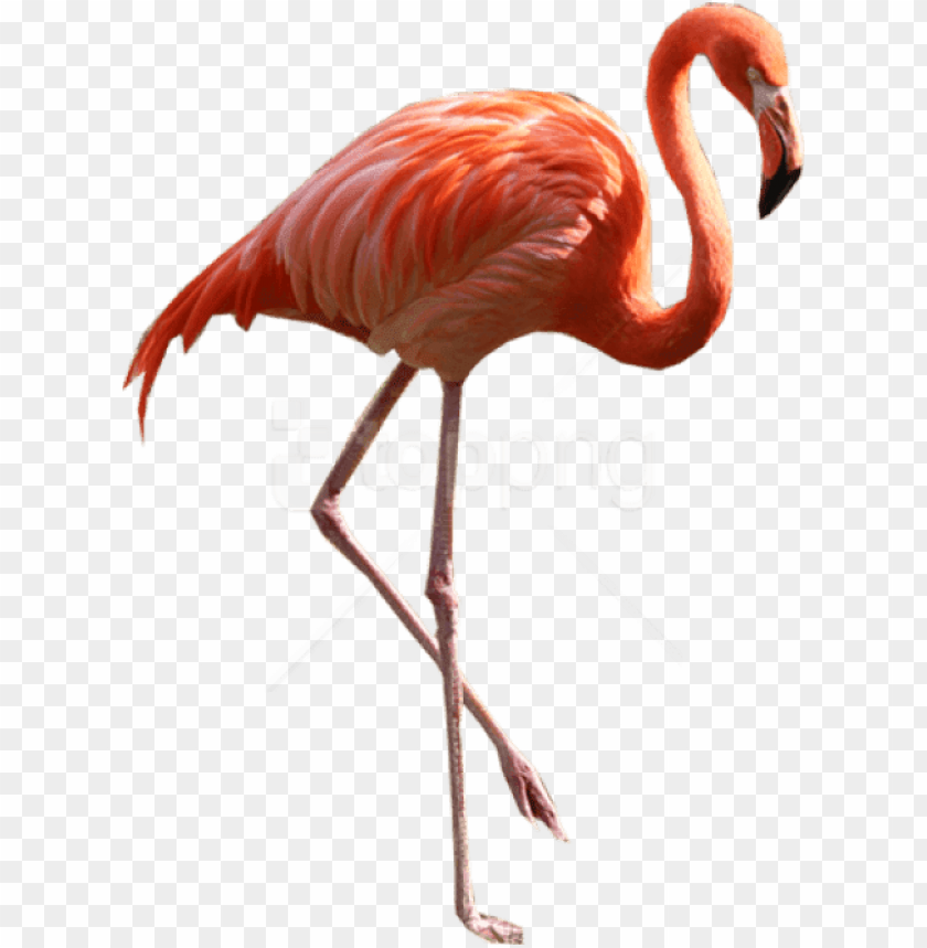 free PNG free png download flamingo png images background png - real flamingo PNG image with transparent background PNG images transparent